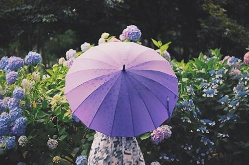 じめじめ気分をスッキリしたい。梅雨時期にオススメのアロマレシピ☔️